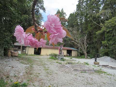八重桜とお焚き上げ場